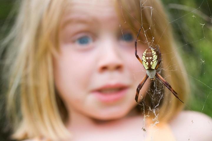 arachnophobia - Spider Legs được bổ sung hiệu ứng rùng rợn ở bản cập nhật mới nhất